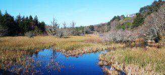 Oregon Coast Wetland